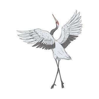 La grulla de corona roja se para sobre una pierna con las alas levantadas estilo boceto