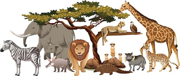 Grupo de animales salvajes africanos sobre fondo blanco.