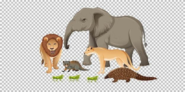Grupo de animales salvajes africanos sobre fondo transparente