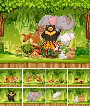 Grupo de animales salvajes en selva.