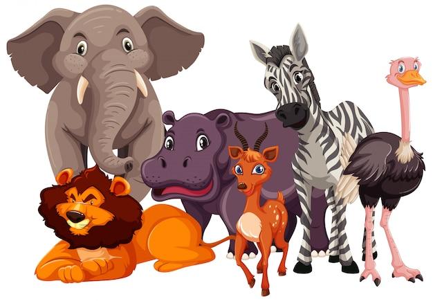 Grupo de animales salvajes