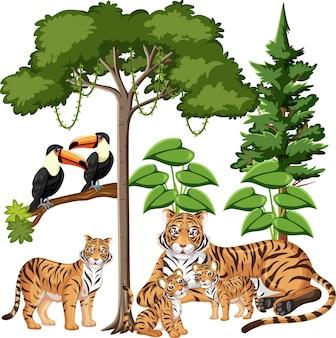 Grupo de familia de tigre con elementos salvajes sobre fondo blanco.