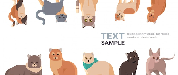 Grupo de gatos de raza pura mullidos adorables animales de dibujos animados gatito doméstico hogar mascotas concepto plano retrato copia espacio horizontal