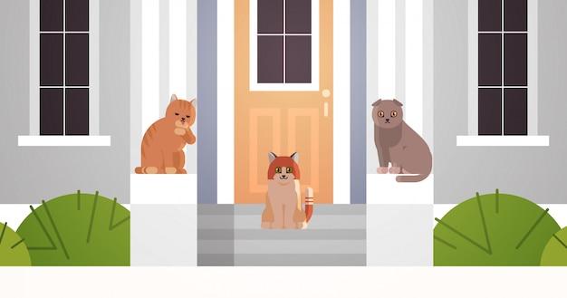 Grupo de gatos sentados en el porche en la entrada de la puerta de la casa mullidos adorables animales de dibujos animados gatito doméstico hogar mascotas concepto edificio closeup fachada plana horizontal