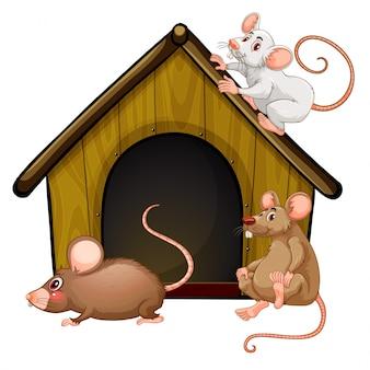 Grupo de lindos ratones con casita aislado sobre fondo blanco.