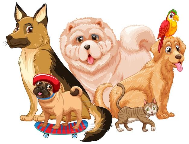 Grupo de mascota sobre fondo blanco.