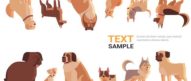 Grupo de perros de raza pura peludos amigos humanos hogar mascotas colección concepto dibujos animados animales conjunto retrato copia espacio horizontal
