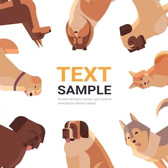 Grupo de perros de raza pura peludos amigos humanos hogar mascotas colección concepto dibujos animados animales conjunto retrato