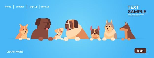 Grupo de perros de raza pura peludos amigos humanos hogar mascotas concepto dibujos animados animales retrato
