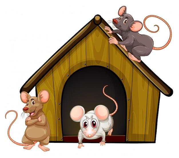 Grupo de ratones lindos con casita sobre fondo blanco.
