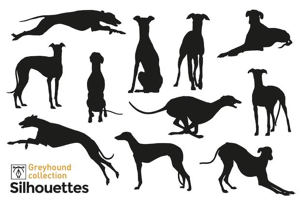 Grupo de siluetas de galgos. perros saltando, jugando, caminando y sentados. iconos de mascotas para tu.