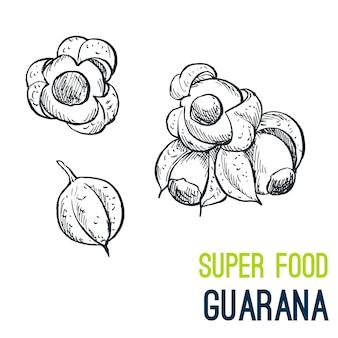 Guaraná súper comida dibujada a mano
