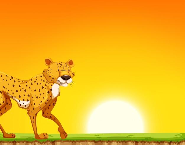Un guepardo en la escena de la puesta del sol