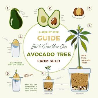 Guia de cultivo de aguacate vector. verde instrucciones sencillas para cultivar aguacate a partir de semilla. ciclo de vida del aguacate.