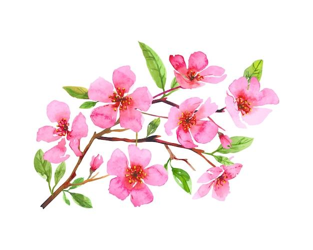 Guirnalda de flores de acuarela flor de cerezo. sakura hermosa primavera floral arte dibujado a mano. ilustración colorida aislada sobre fondo blanco.