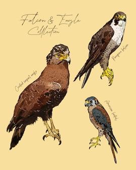 Halcón y águila mano dibujar boceto.