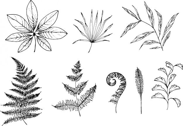 Helecho y hierbas dibujados a mano con pluma de tinta
