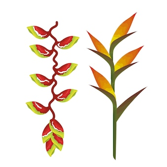 Heliconias tropicales y exóticas