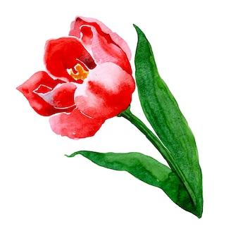 Hermosa acuarela floral y hojas