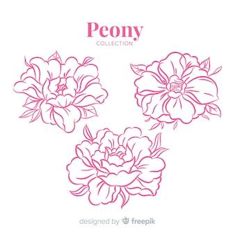 Hermosa colección de flores peonía dibujados a mano