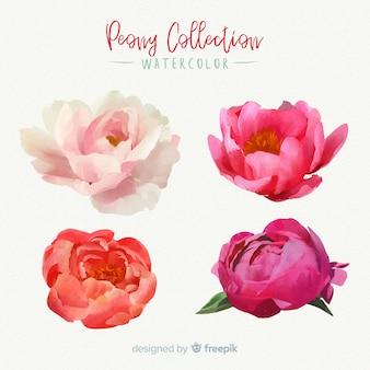 Hermosa colección de flores peonía