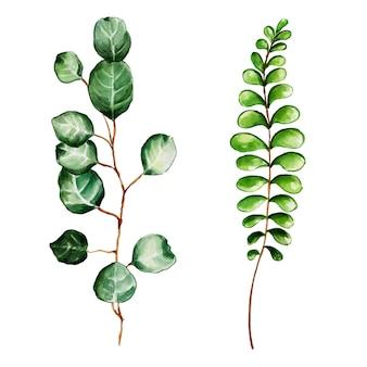 Hermosa colección de hojas de acuarela