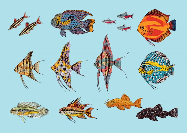 Hermosa colección de peces de acuario