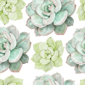 Hermosa flor suculenta acuarela de patrones sin fisuras