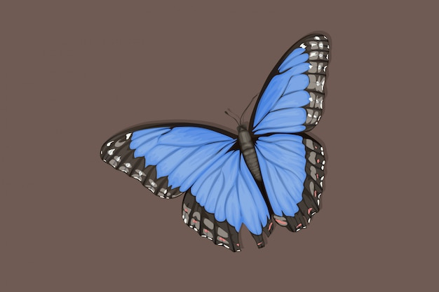 Hermosa mariposa azul con alas elegantes
