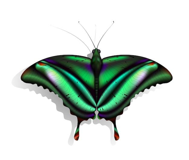 La hermosa mariposa verde con marcas rojas y moradas.