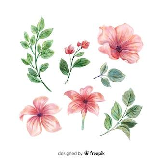 Hermosas flores y hojas de acuarela