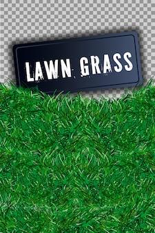 Hermoso campo de hierba verde