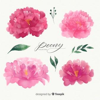 Hermoso conjunto de flores peonía