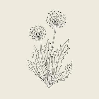 Hermoso dibujo de planta de diente de león con cabezas de semillas maduras o bolas de aire que crecen en tallos y hojas