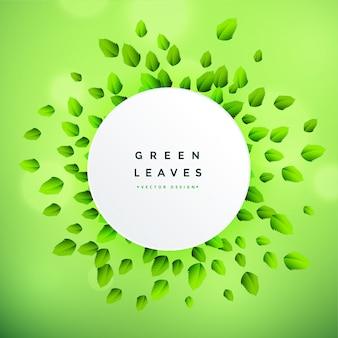 Hermoso fondo de marco de hojas verdes