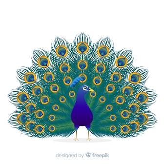 Hermoso fondo de pavo real