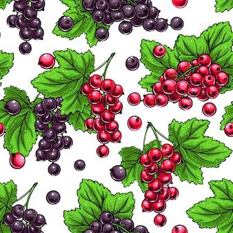 Hermoso fondo transparente con ramitas de grosellas rojas y negras