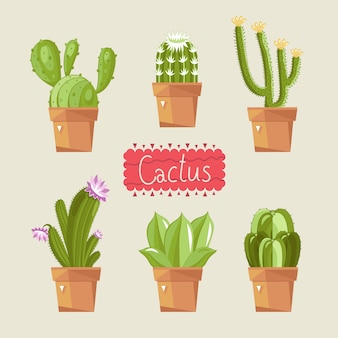 Hermoso paquete de cactus de la casa.