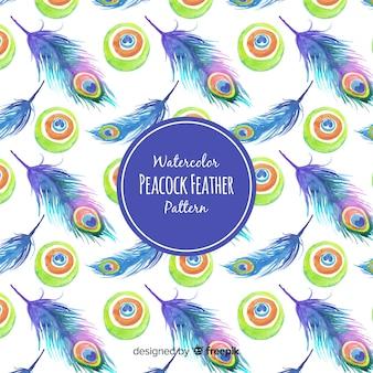 Hermoso patrón de plumas de pavo real