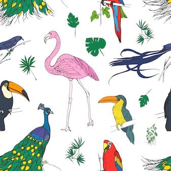 Hermoso patrón transparente coloreado con pájaros tropicales y hojas exóticas dibujado a mano sobre fondo blanco.