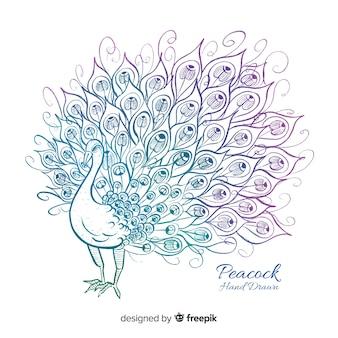 Hermoso pavo real dibujado a mano
