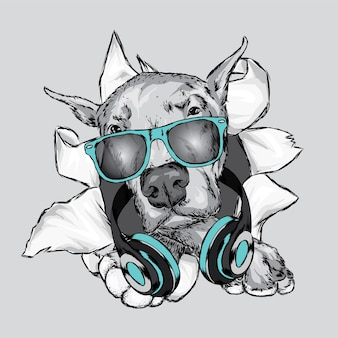 Hermoso perro con gafas y auriculares