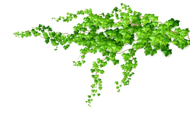 Hiedra de liana arbusto verde realista aislada sobre fondo blanco. ilustración vectorial