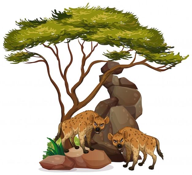Hiena aislada debajo del árbol