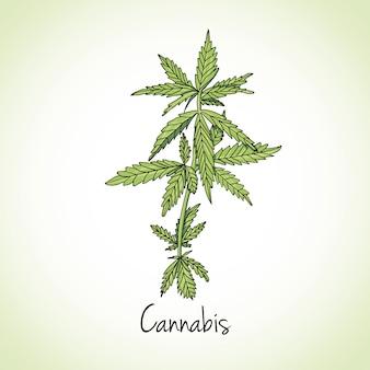 Hierba de cannabis. hierbas y especias