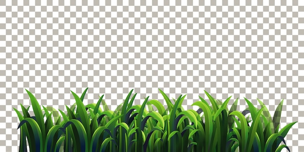 Hierba sobre fondo transparente