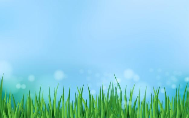 Hierba verde contra el cielo azul de fondo de primavera