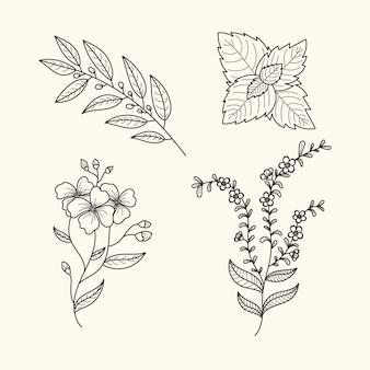 Hierbas botánicas y flores estilo vintage