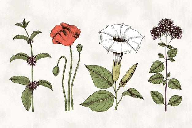 Hierbas botánicas y flores en estilo vintage