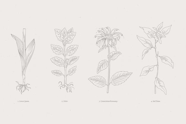 Hierbas botánicas y flores silvestres monocromáticas